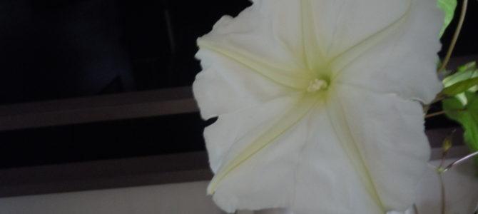 花粉の知識がちょっと得られた仕事
